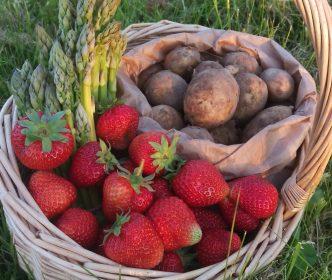 jordbær kurv